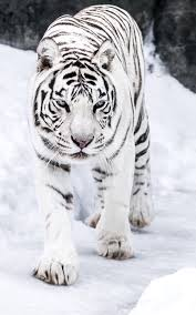 The animal that personifies fashion for me