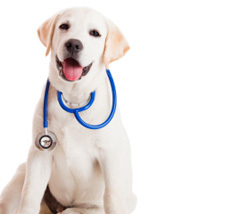 box-virtualclinic-dog